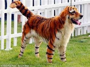 S Itz Dog Breed